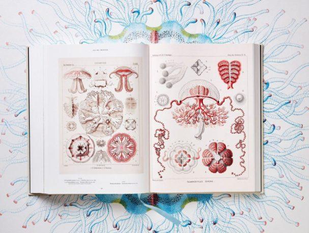 biologische-illustraties