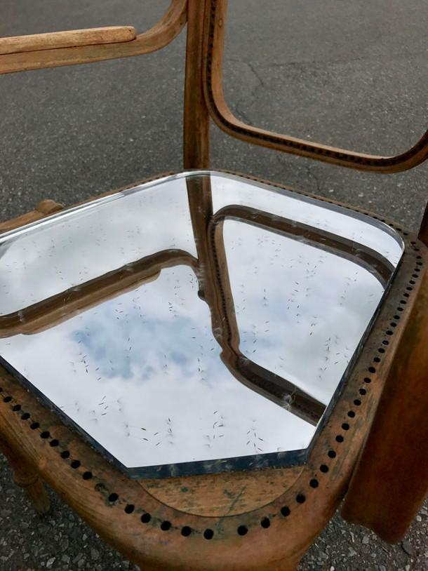 stoelen-paardenbloem-2