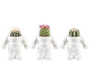 king-cactus-bloempot