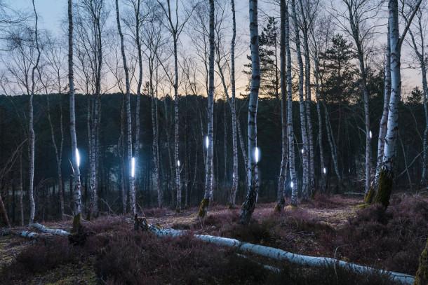 nachtelijk-verlicht-bos-2