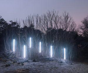 nachtelijk-verlicht-bos