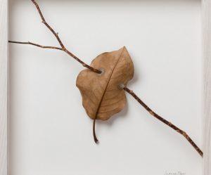 haken-gevonden-bladeren