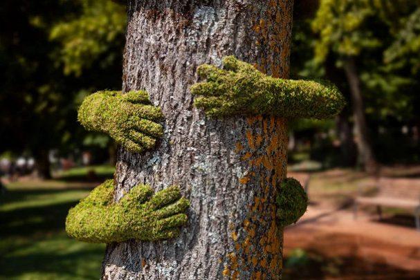installatie-bomen-mos