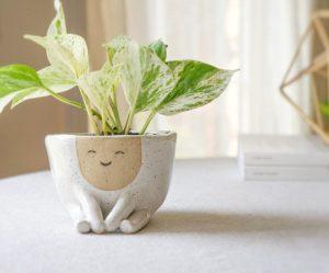 plantenpotten-kapsels