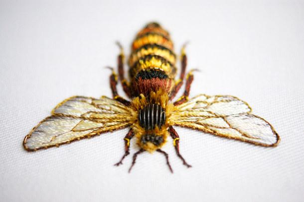 kleuren-borduren-insecten-4