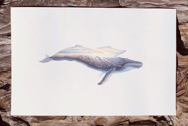 aquarel-schilderijen-dieren