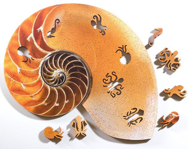 puzzels-fossielen-schelpen-3