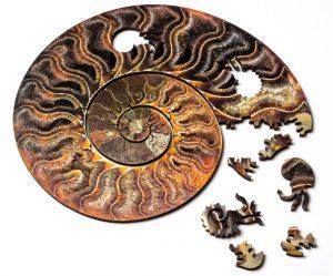 puzzels-fossielen-schelpen