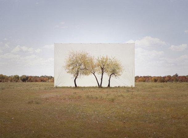 foto-serie-portretten-bomen-2