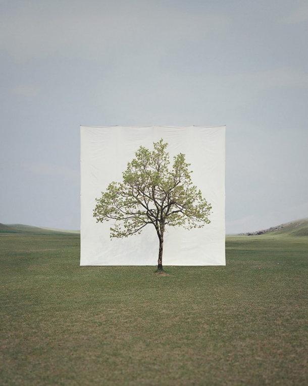 foto-serie-portretten-bomen-3