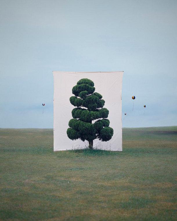 foto-serie-portretten-bomen-4