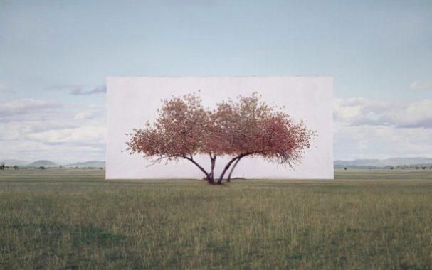 foto-serie-portretten-bomen