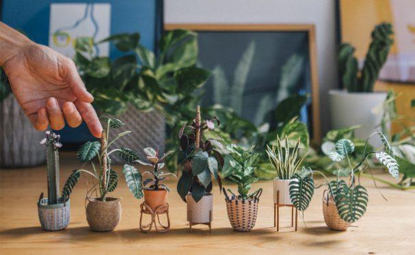 minuscule-papieren-planten