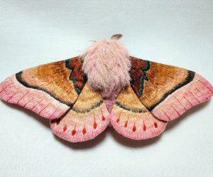 vilten-motten-vlinders
