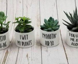 grappige-kleine-plantenpotten