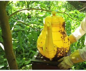honingraat-theepot-bijen