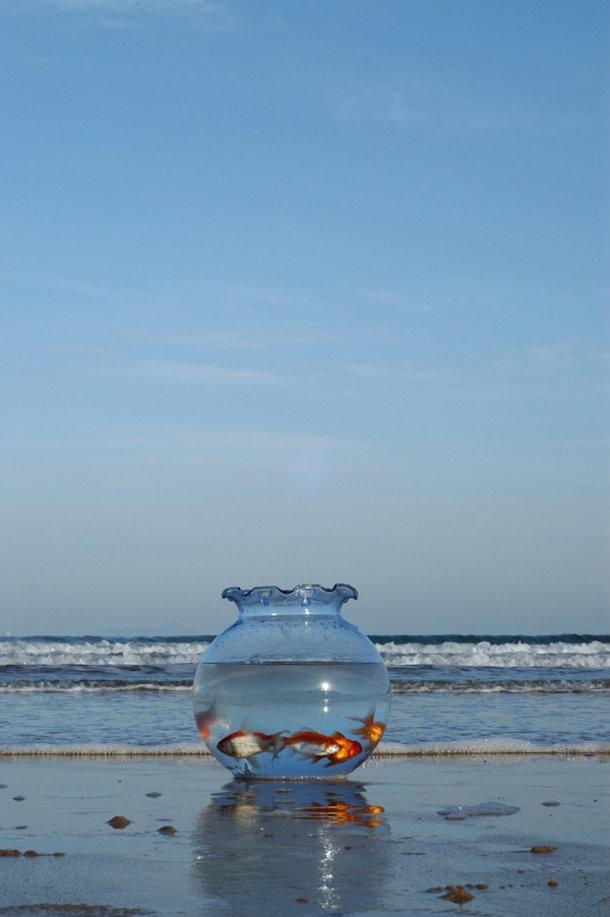 Goudvissen aan zee - Surrealistische Koreaanse kunst