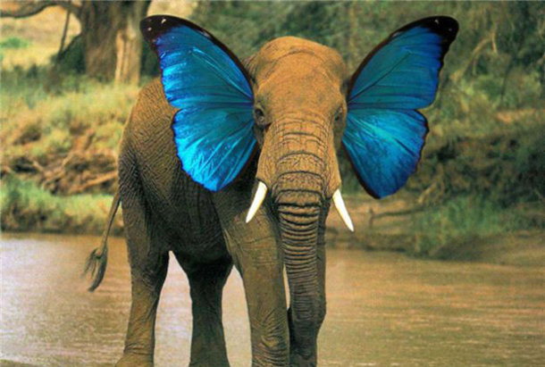 Olifant met vlindervleugels als oren
