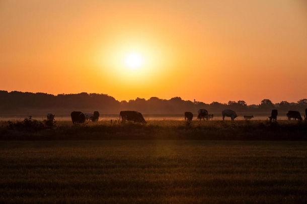 Vakantieboerderij van Het Betere Boerenbed