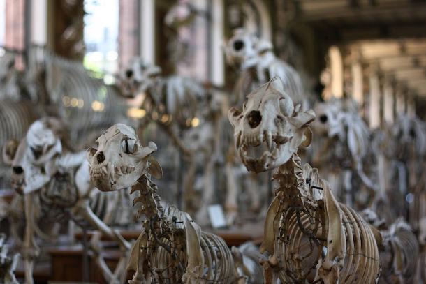 Natuur Historisch Museum in Parijs