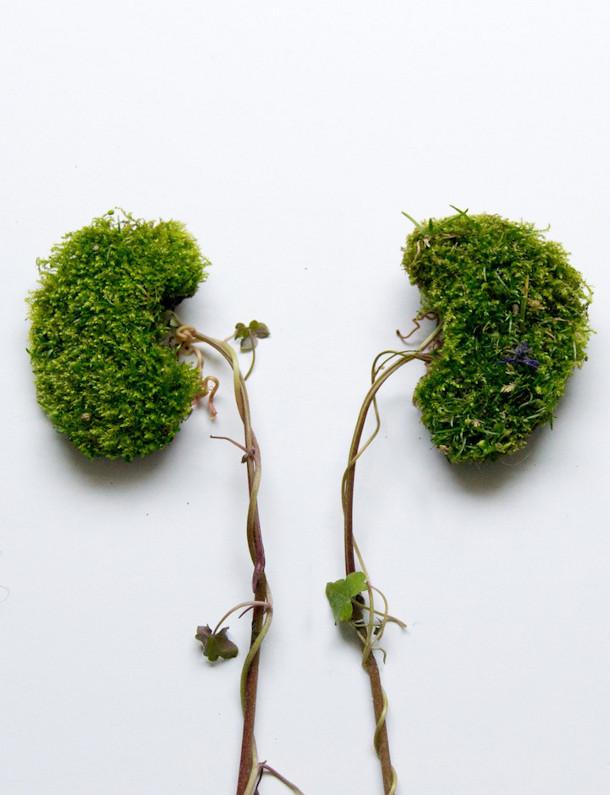 foto-planten-mensen-organen-5