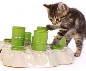 Kattenspeelgoed