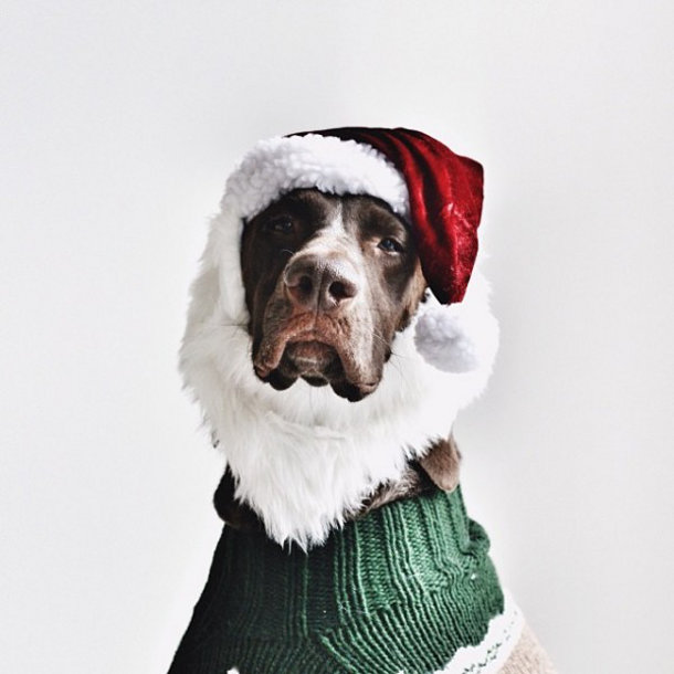 hond-foto-kerst-5
