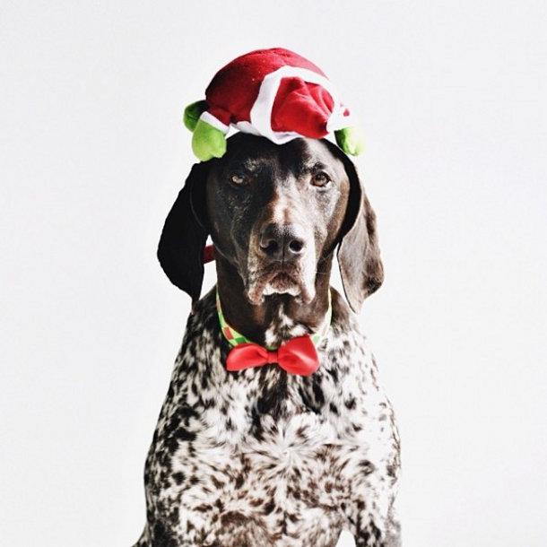 hond-foto-kerst-6