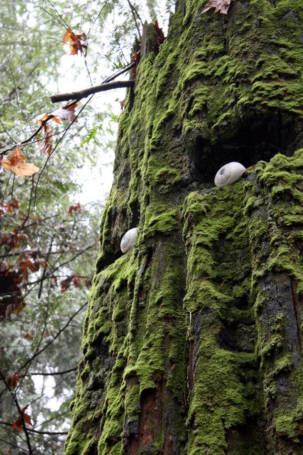 Bomen met porseleinen ogen