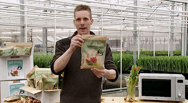 tulpen-magnetron