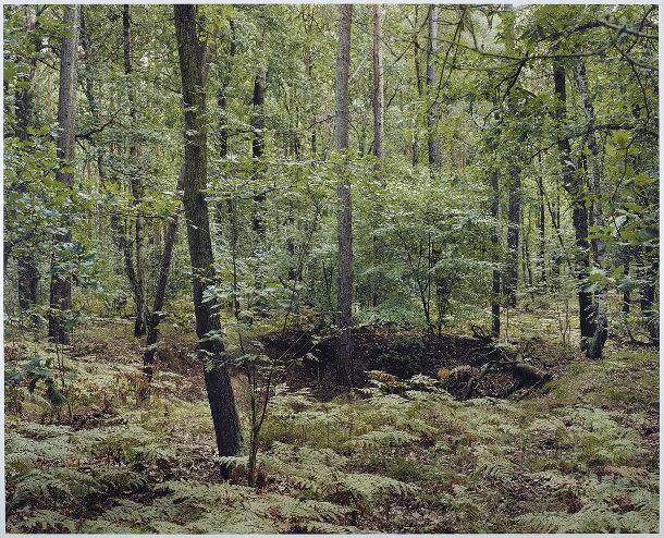 kraters-bossen-duitsland-4