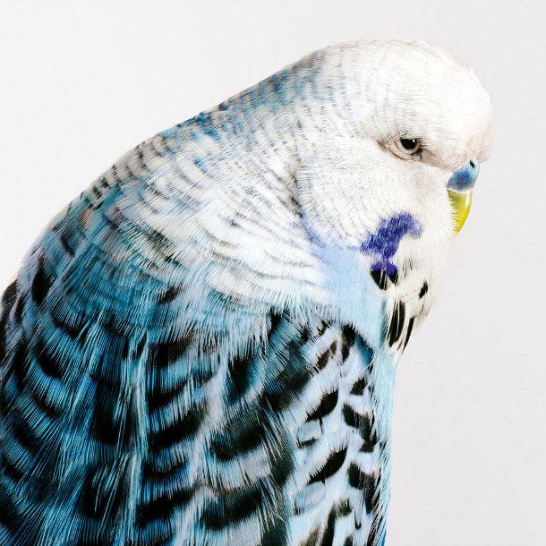 portretten-vogels-leila-jeffreys-2