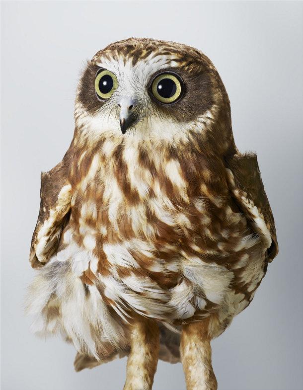 portretten-vogels-leila-jeffreys-3