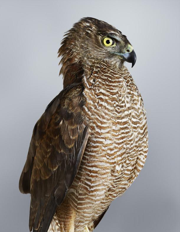 portretten-vogels-leila-jeffreys-4