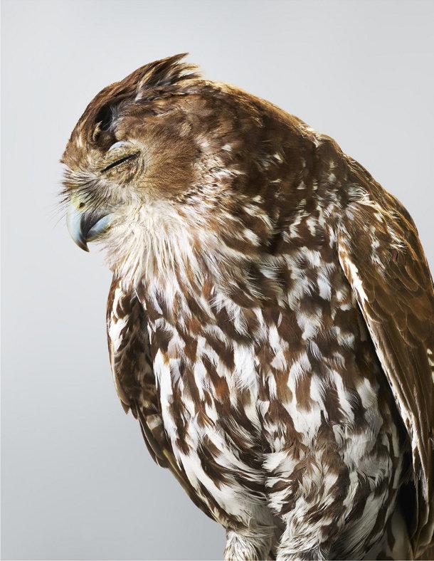 portretten-vogels-leila-jeffreys-5