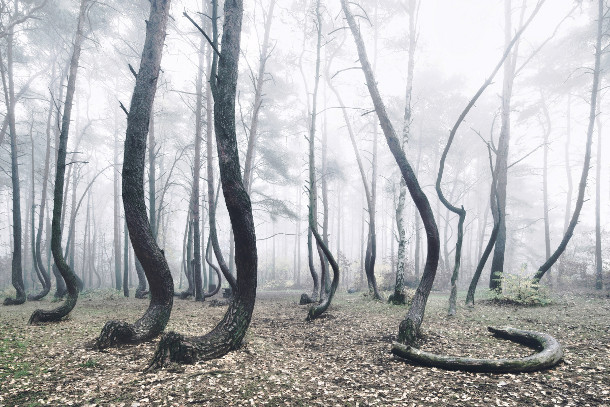 bomen-bos-polen-3