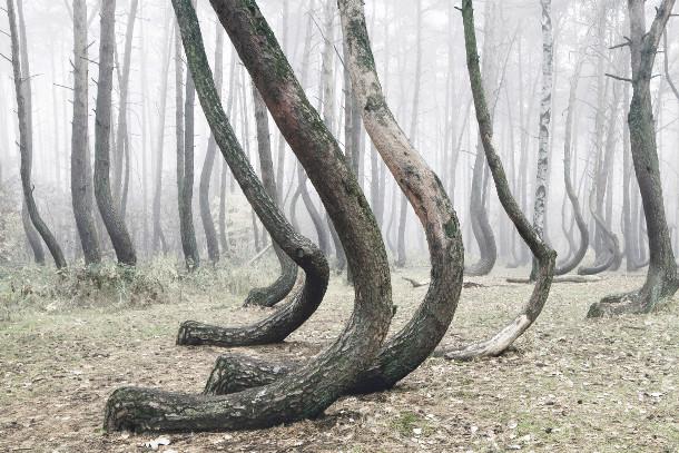 bomen-bos-polen-5