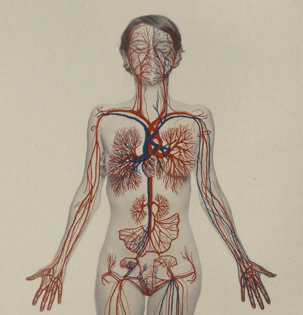 anatomie-borduren-fotos-2
