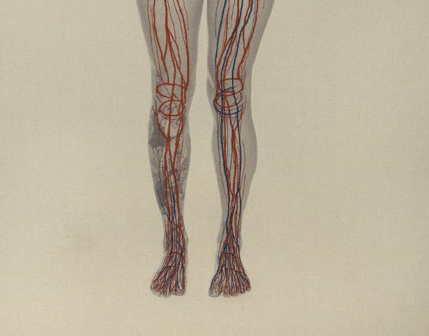 anatomie-borduren-fotos-3