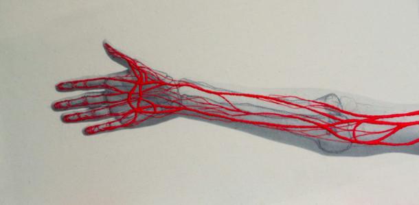 anatomie-borduren-fotos-8