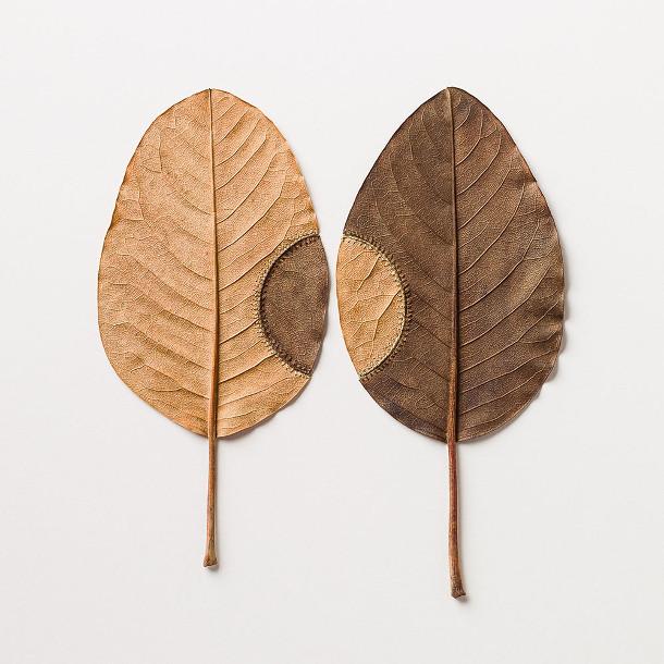 haken-bladeren-2