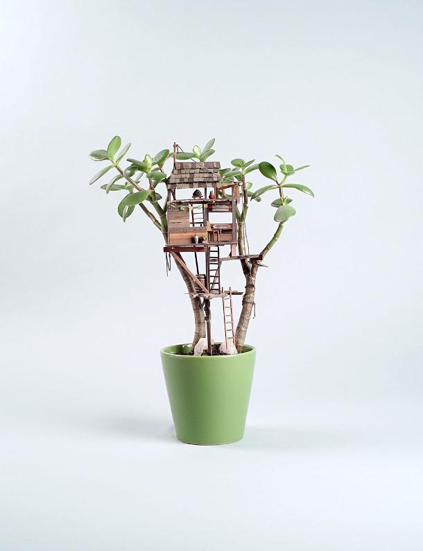boomhutten-kamerplanten-2