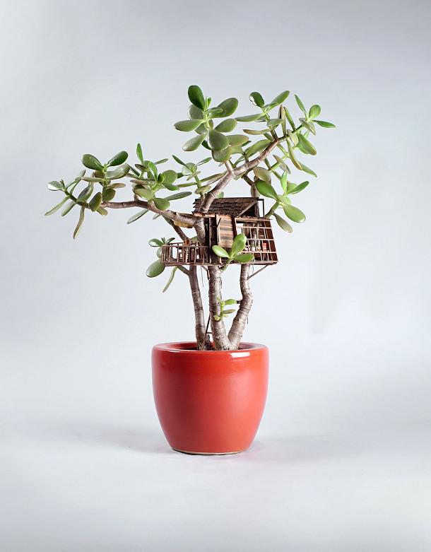boomhutten-kamerplanten-5