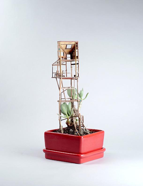 boomhutten-kamerplanten-6