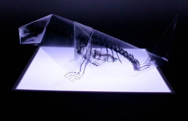 rontgen-origami-5