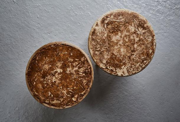 paddenstoelen-interieur-7