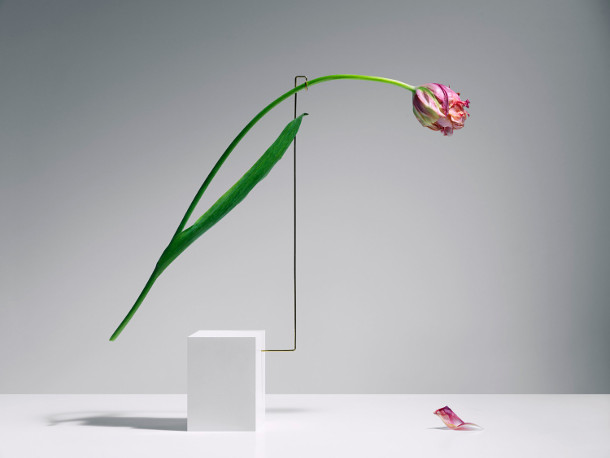 dansende-tulpen-2