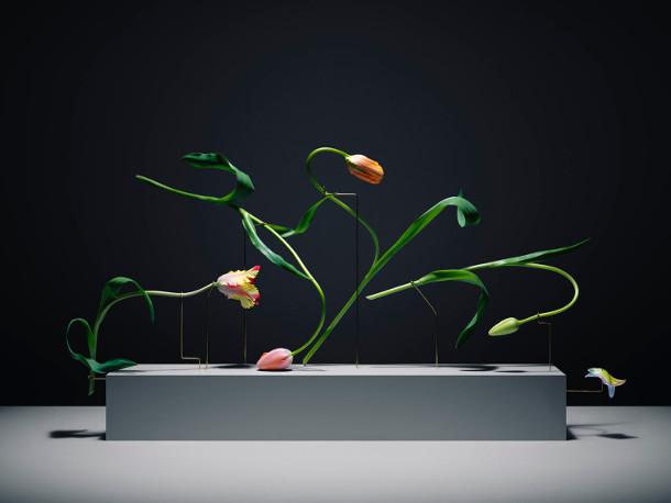 dansende-tulpen