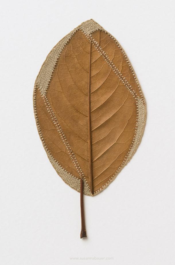 haken-gevonden-bladeren-4
