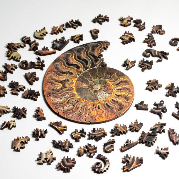 puzzels-fossielen-schelpen-2